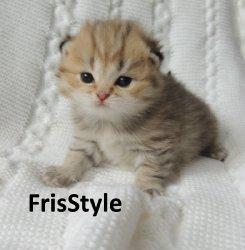 FrisStyle Harmony
